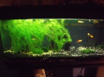 aquariophil80