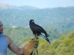 eagles11