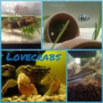 lovecrabs