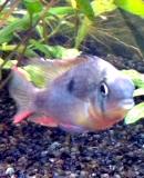 aquaticusdu13