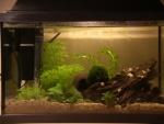 le poisson 31