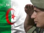 Seif Aljazairi