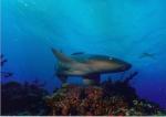 UnderwaterDetector