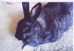 Starlights Rabbit Rescue
