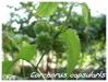 Plantes aquatiques Corcho10