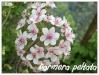 Plantes aquatiques Darmer10