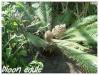 plant femelle