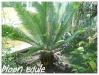 plant mâle