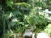 Palmiers et cycadales Dsc05125