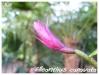 Orchidées et carnivores Ellean10