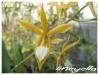 Orchidées et carnivores Encycl10