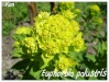 Plantes aquatiques Euphor18