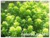 Plantes aquatiques Euphor19