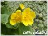 Plantes aquatiques Fp810