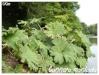 Plantes aquatiques Gunner10