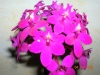 Orchidées et carnivores Noel_010