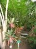 Palmiers et cycadales Parc_o10