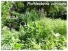 Plantes aquatiques Ponted13