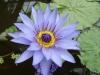 Plantes aquatiques Sl273712