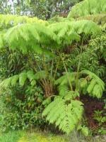 Autres plantes 19-45