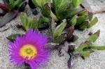 Orchidées, broméliacées et carnivores 432-4