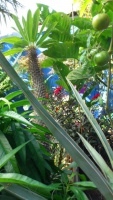Hors de nos jardins 987-14