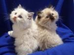 cats96