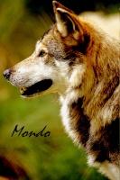créer un forum : Loups vs Renards 1-18