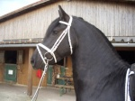 horsiehannah1997