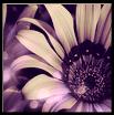 Dizzy Flower