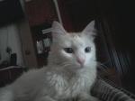 TO ΓΑΤΟΣΠΙΤΟ...^..^... Είμαστε και πολύ γάτες! 2242-43
