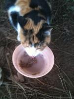 kittycat11