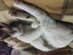 TO ΓΑΤΟΣΠΙΤΟ...^..^... Είμαστε και πολύ γάτες! 4290-99