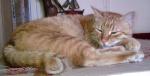 TO ΓΑΤΟΣΠΙΤΟ...^..^... Είμαστε και πολύ γάτες! 5958-88