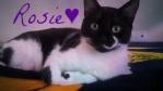 Rosie.Cat