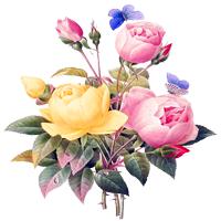 Mooncup, Fleurcup, Meluna, LadyCup... 3585-53