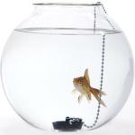 Fishbowl444