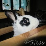 stess