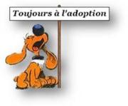 BEUCK - x labrador/beauceron 12 ans (10 ans de refuge) - Refuge Clochards Poilus à Tabanac (33) 771574