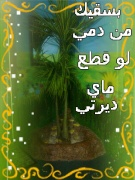 bodaneh