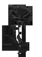 Black Rose Guild Vault 67-33