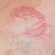 Rose Drasi