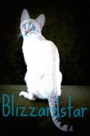 Blizzardstar