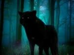 lobo_negro