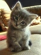 Garde de chats  8-43