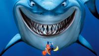 Maitre Requin