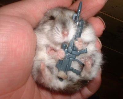 ~Hamster
