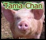 Tama-Chan