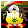 jerome pingouin