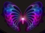 papillon078